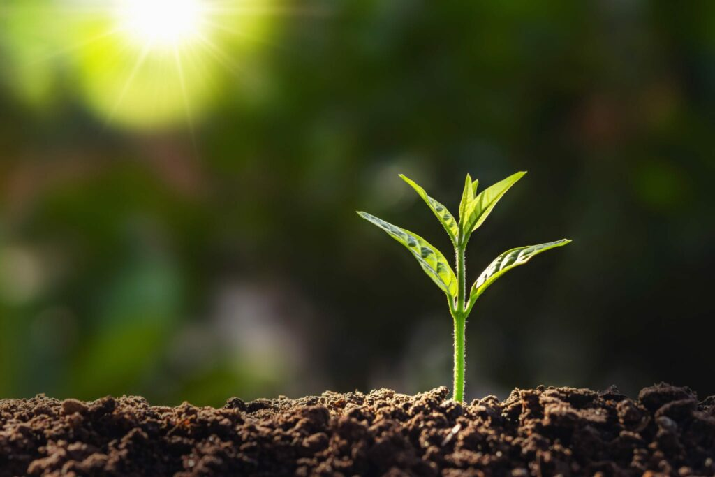 the right habits start small just like this budding seedling